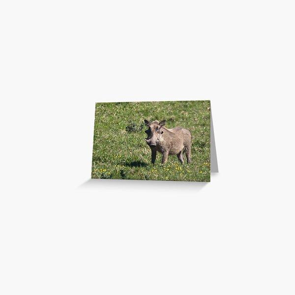 Warthog Greeting Card