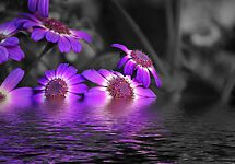 REFLECTION by PALLABI ROY