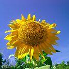 sunny by BellatrixBlack