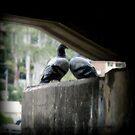 love birds  by Jessica Lauren Smith