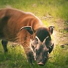 The Warthog (Lomography) by Joel Stone