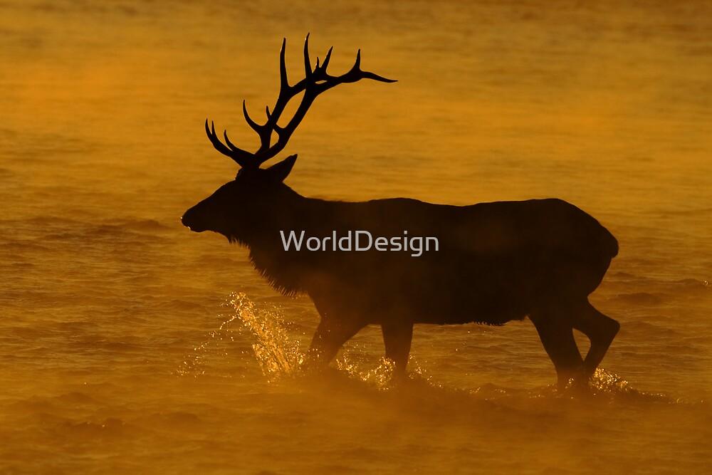 A Steamy Sunrise by WorldDesign