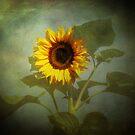 Sunburst by Carol Bleasdale