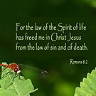 The Law that Frees ~ Romans 8:2 by Robin Clifton