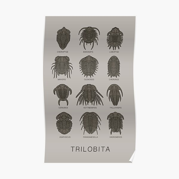Trilobita Poster