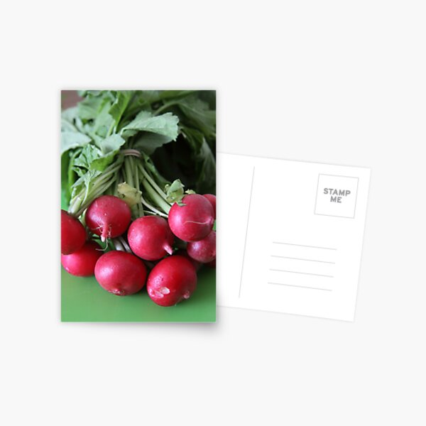 Fresh from the Farmers' Market (Radishes) Postcard
