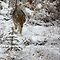 Animals in the Snow - $20USD RB Voucher