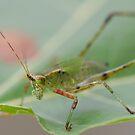 Grasshopper Camouflage! by vasu