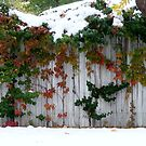 seasons in between by greeneyedlady