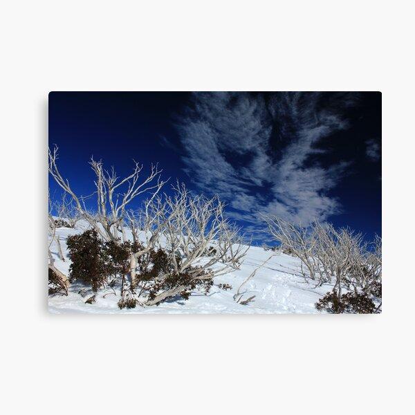 Mt Hotham trees Canvas Print