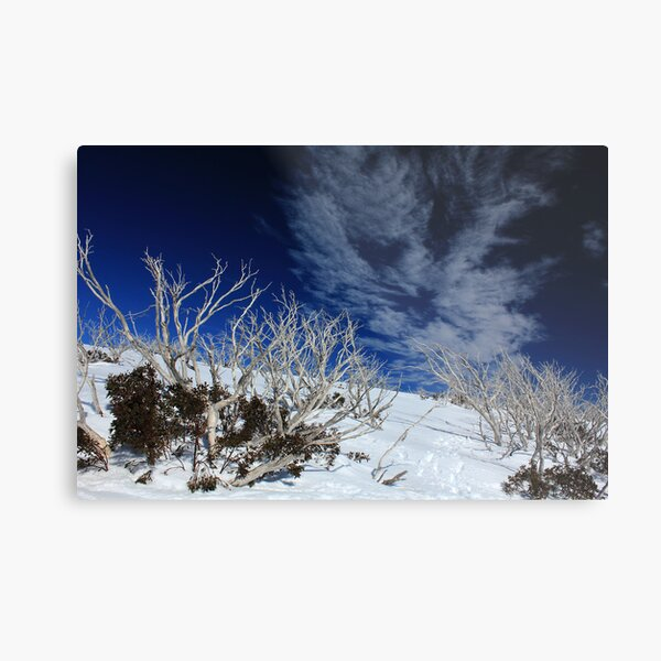 Mt Hotham trees Metal Print