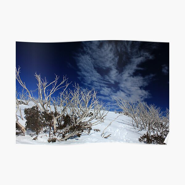 Mt Hotham trees Poster