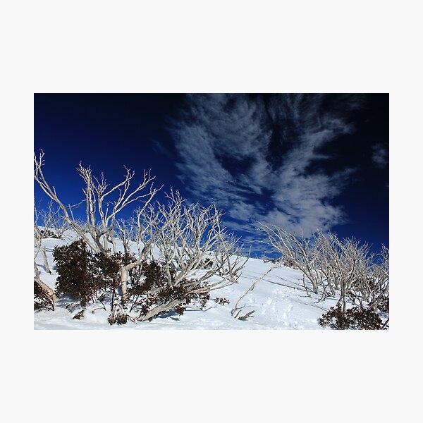 Mt Hotham trees Photographic Print