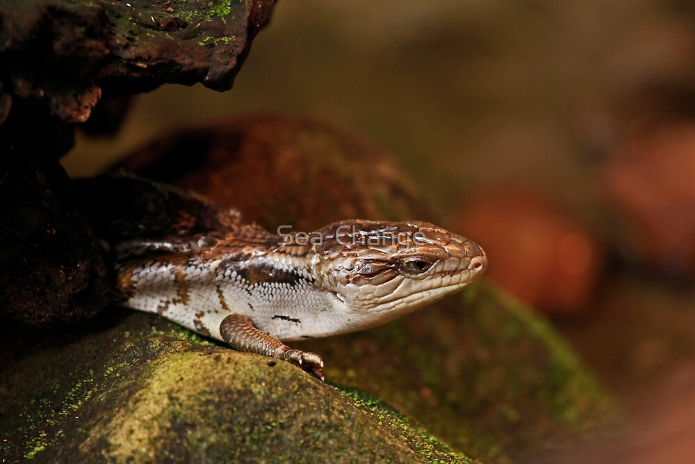 Blue Tongued Lizard by Sea-Change