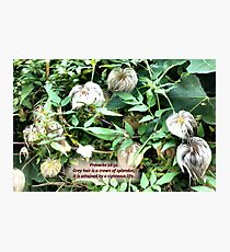 SILVER HEADS  a garden with a message for the elders! Photographic Print
