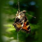 In the grip of the spider by hanslittel