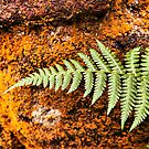 Firn against Moss by SylviaHardy