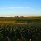 Summer Corn Field by Scott Hendricks
