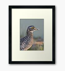 Thick-knee....... Framed Print