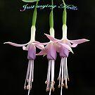 Pink Fuchsia Greeting by Bev Pascoe