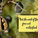 The Word Grew and Multiplied ~ Acts 12:24 by Robin Clifton