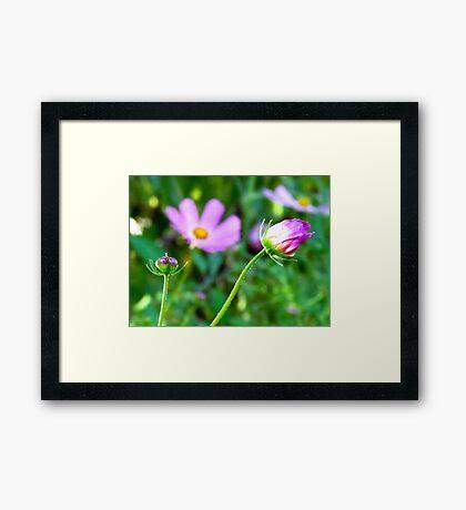 Just Pink Framed Print