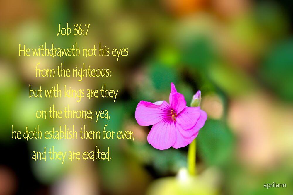 He withdraweth not his eyes by aprilann
