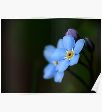 Forget-Me-Nots 10 Poster