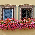 Flower Burst & Windows. by Lee d'Entremont