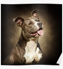 The American Blue Pit-Bull Poster