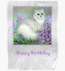 Mistletoe The Silver Shaded Chinchilla Persian Cat Birthday Card Poster