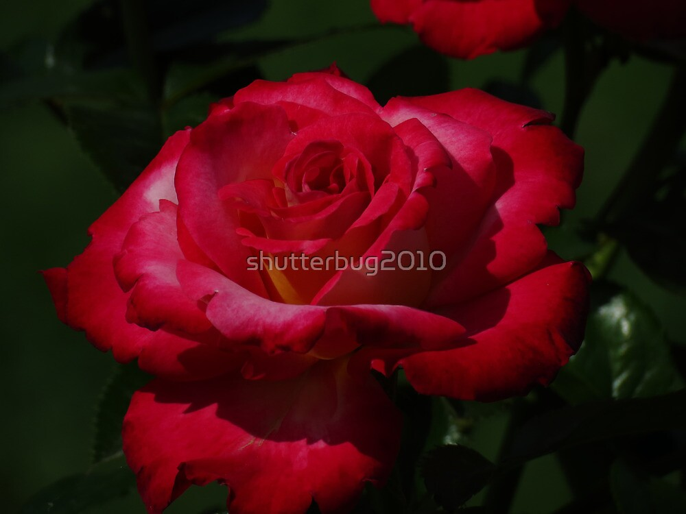 Shades of Romance by shutterbug2010