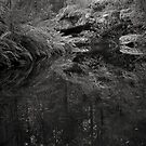 Snug River #34 by Phillip Hirst