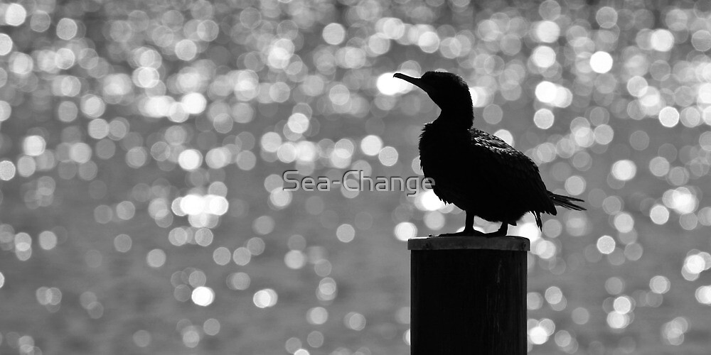 Silhouettes and Bokeh by Sea-Change