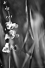 Busy Bee's and Flowers Black and White Photograph by William Martin