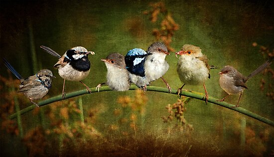 Fairy-wren Fantasy by Barb Leopold