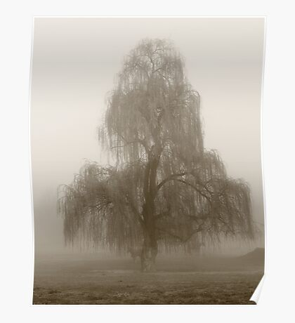 Moody Willow  Poster