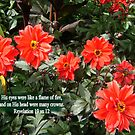 CROWNS OF FIRE  Red Dahlias with BIBLE TEXT/NO TEXT by Shoshonan
