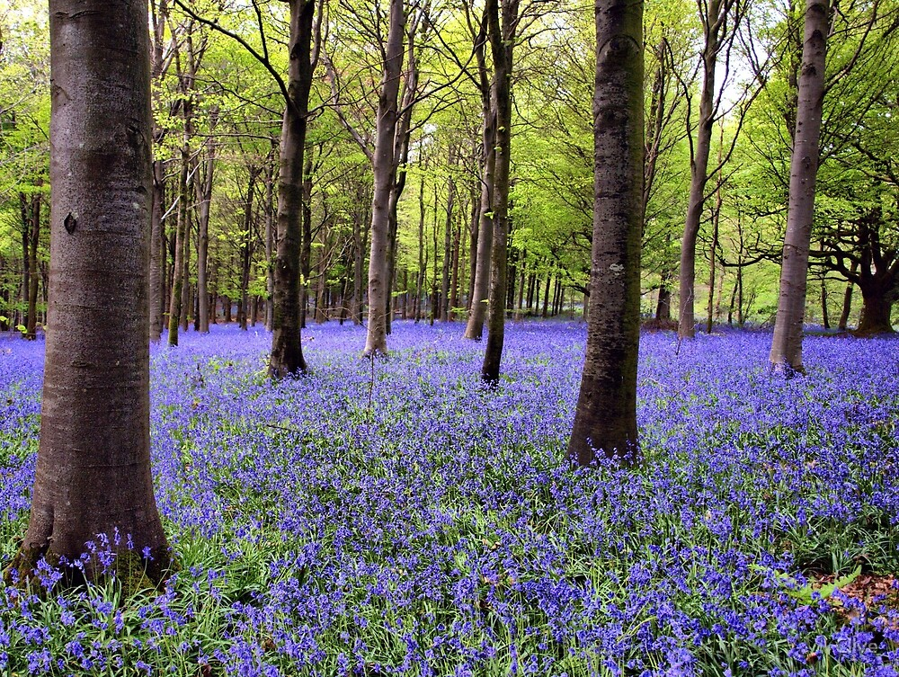 Across a Sea of Blue by Clive