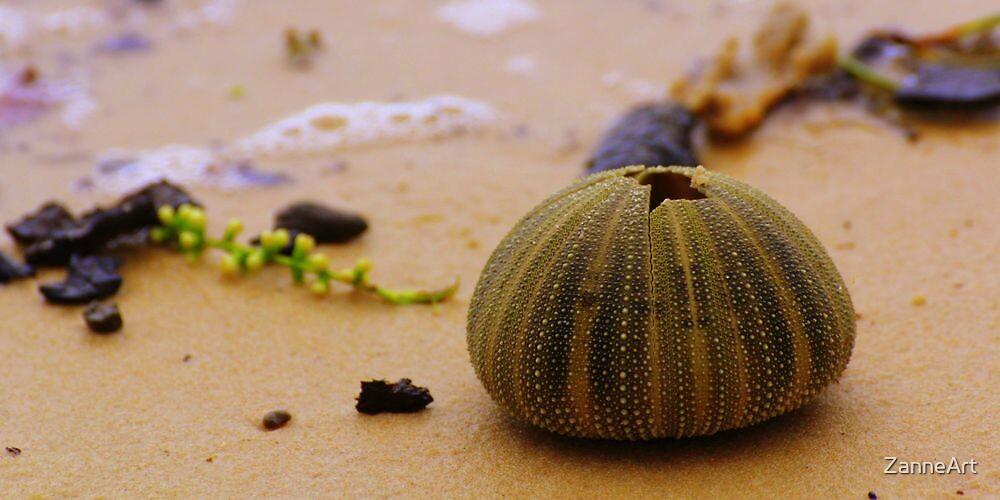 Elim beach anenome by ZanneArt