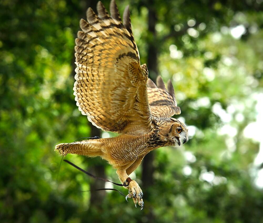 Owl Take Off by Saddleguy