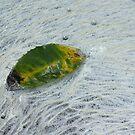 Sassafras Leaf in River Foam by Phillip Hirst