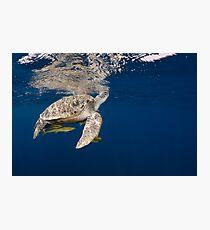 Golden Turtle Photographic Print