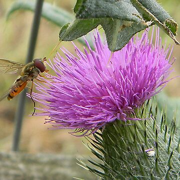 Bug on a Thistle by LCDesigns