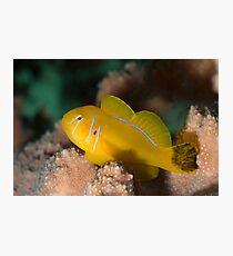 Golden fish Photographic Print