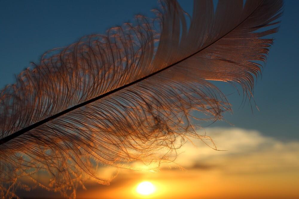Feather 19 by Carolyn  Fletcher