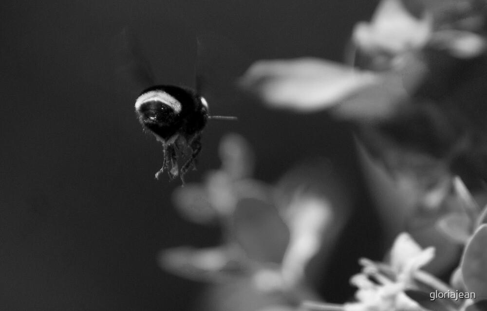 Bee at work by gloriajean