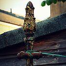 A-Peeling Pole by DoreenPhillips