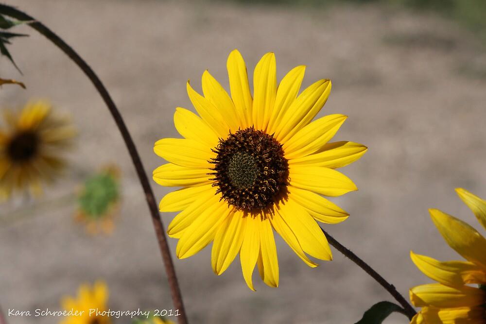 Utah Wildflower by DressageFan1