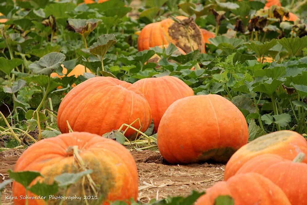 Fall Pumpkin Bounty by DressageFan1